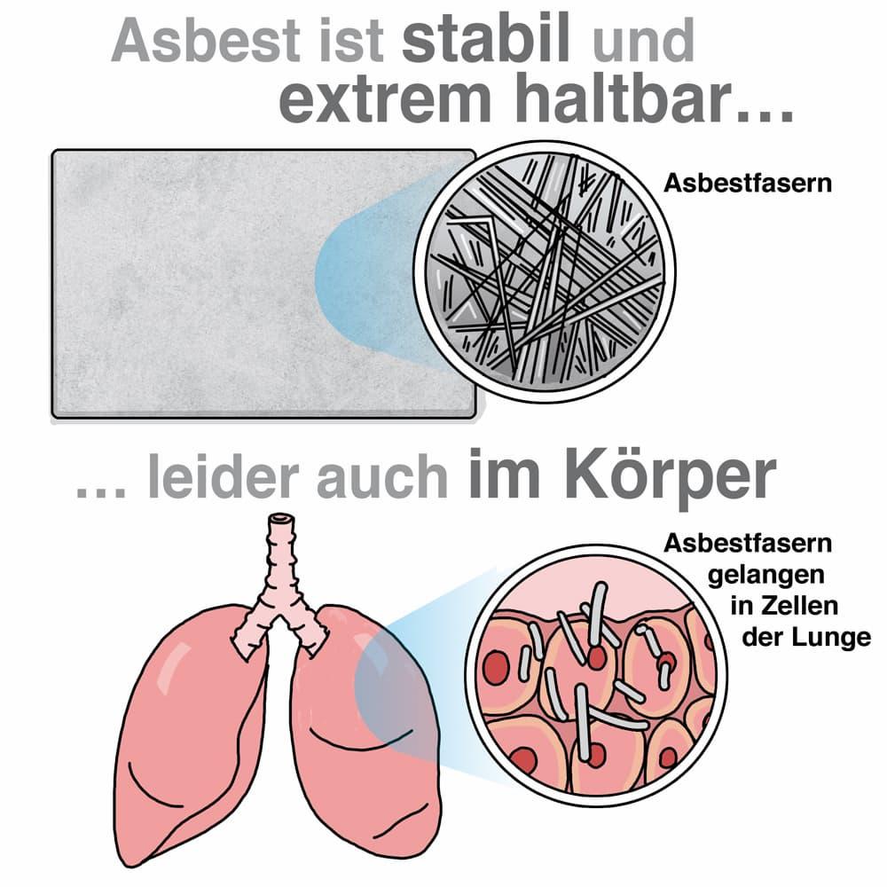 Asbestfasern können die Gesundheit schädigen
