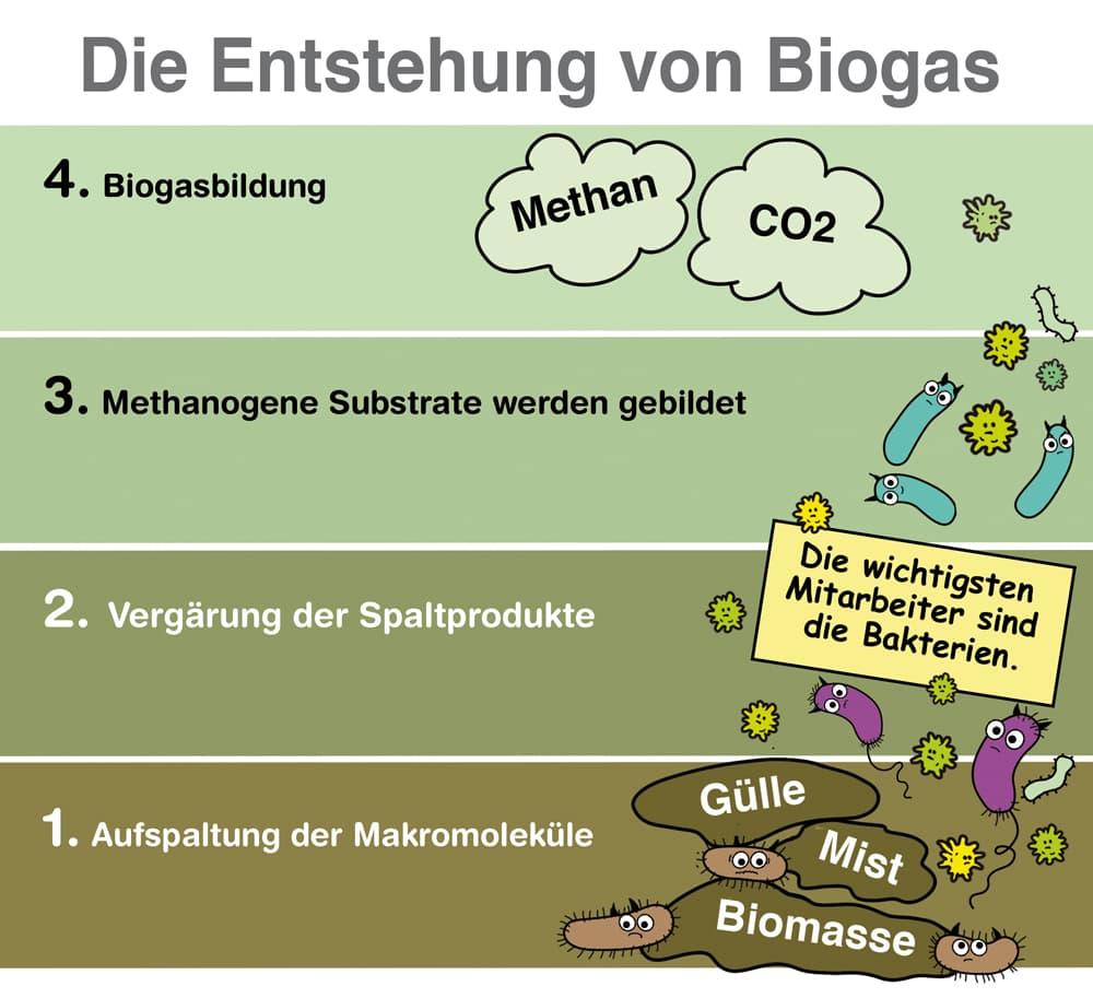 Die Entstehung von Biogas
