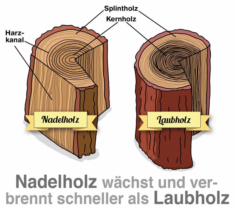 Nadelholz wächst und verbrennt schneller als Laubholz