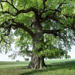 Brennholz: Heizwert und Brennwert
