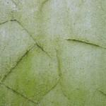 Fassadendämmung: Algenbefall vermeiden