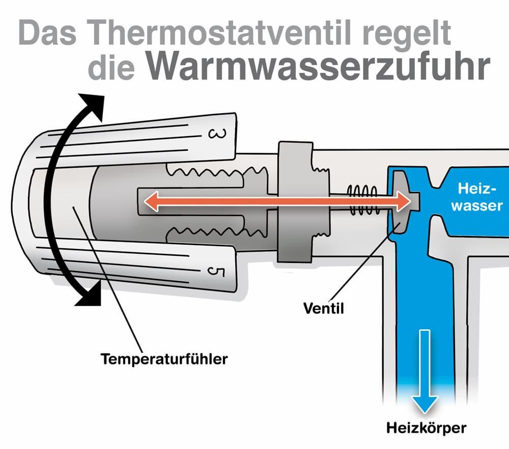 Das Thermostatventil regelt die Warmwasserzufuhr