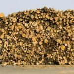 Nachhaltigkeitszertifikat für Holz aus Agrarholzflächen wird entwickelt
