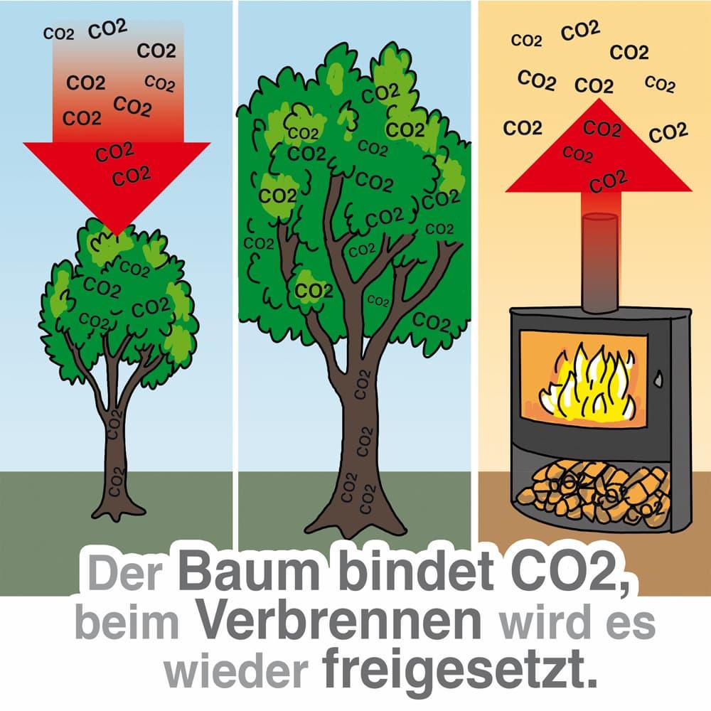 Heizen mit Holz kann co2-neutral sein, wenn die Bäume extra dafür gepflanzt werden